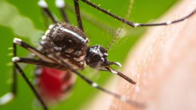 Febre amarela: alguns mitos e verdades